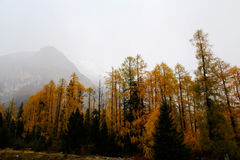 The autumn beauty of Four Girls Mountain. Four Girls Mountain is reputed as the Oriental Alps, located in Xiaojin County of Aba Tibetan and Qiang Autonomous Royalty Free Stock Image