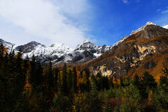 The autumn beauty of Four Girls Mountain. Four Girls Mountain is reputed as the Oriental Alps, located in Xiaojin County of Aba Tibetan and Qiang Autonomous Royalty Free Stock Images