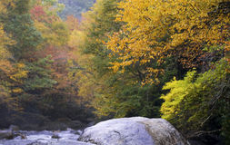 Autumn Beauty Great Smoky Mountains Stock Images