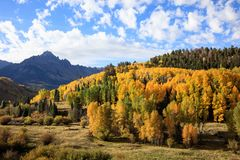 Autumn Beauty i Colorado - Dallas Divide arkivfoto