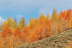 Autumn Beauty i Tetonsen Arkivbild
