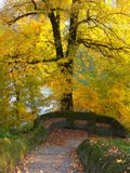 Autumn. The beauty of nature in autumn Royalty Free Stock Photography
