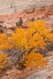 Autumn Beauty in Zion National Park Royalty Free Stock Photos