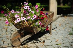 Autumn beds. Autumn flower beds in a wood trolley Stock Images
