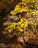 Autumn Beech and Creek Royalty Free Stock Images