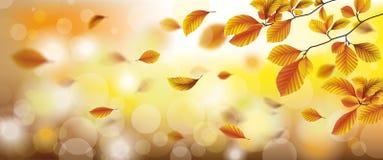 Autumn Beech Foliage Fall Sunlights Wind Header. Autumn beech foliage with sunlights and bokeh Royalty Free Stock Photos