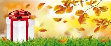Autumn Beech Foliage Sunlights Grass gåva Royaltyfria Bilder