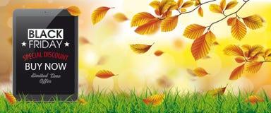 Autumn Beech Foliage Sunlights Grass minnestavla Black Friday Royaltyfri Foto