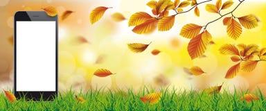 Autumn Beech Foliage Sunlights Grass Smartphone Arkivbilder