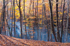 Autumn in beech forest Stock Image