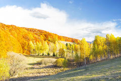Autumn beech forest,countryside landscape Stock Photo