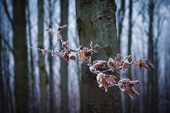 Autumn beech forest Royalty Free Stock Image