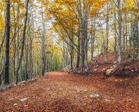 Autumn Beech Forest no parque natural de Montseny fotos de stock royalty free