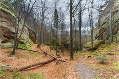 Autumn beech forest with stone boulders Stock Image
