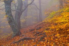 Autumn beech forest Royalty Free Stock Photos