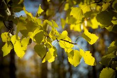 Autumn beech leaves decorate a beautiful nature bokeh background Stock Images