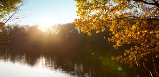 Colorful beech leaves on the sun and forest lake. stock image