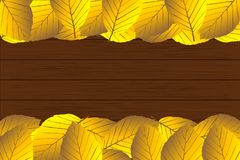 Autumnal leaf of beech. Autumn -  beech leaves - vector background, Autumnal leaf of beech, Fagus sylvatica Royalty Free Stock Photography