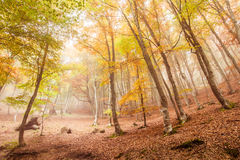 Autumn beech Stock Images