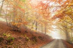 Autumn beech Royalty Free Stock Photos