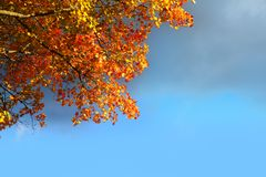 Autumn beech tree leaves stormy cloud blue sky Royalty Free Stock Photography