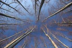 autumn beech trees Στοκ Εικόνες