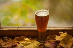 Autumn beer glass Stock Image
