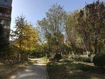 Autumn in Beijing. Afternoon walk in Beijing Stock Photos