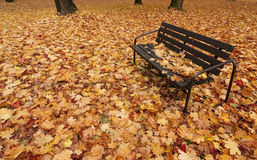 Free Autumn Bench Royalty Free Stock Images - 13305689