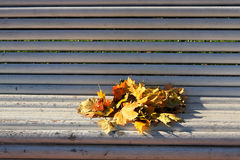 Autumn bench. Autumn maple leaves on the white bench Royalty Free Stock Images