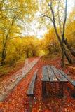 Autumn bench Royalty Free Stock Photos