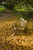 Autumn Bench. A bench surrounded by Autumn leaves stock images