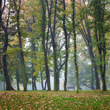 Autumn bench in misty park Royalty Free Stock Images