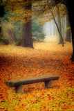 Autumn bench Stock Images