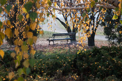 Autumn bench. With trees, Yellow leafs ,sunny autumn day in the city park Stock Photo