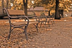 Autumn benches. Benches row in the autumn park stock images