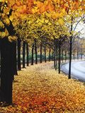 Autumn in Berlin. Autumn leaves walk Berlin Stock Photos