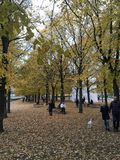 Autumn in berlin. Trees leafs falls stock images