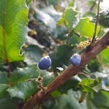 Autumn Berries Arkivbild