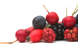Autumn Berries. Mixed wild berries, from autumn in England Stock Images
