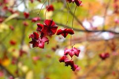 Autumn Berries Stockbild