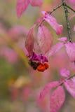 Autumn Berries Photographie stock libre de droits