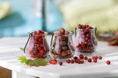 Autumn Berries Stock Fotografie