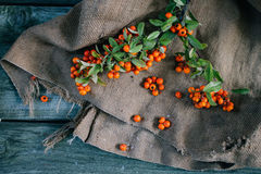 Autumn berries on burlap and wooden background. View from above Stock Photography