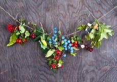 Autumn berries Stock Photography