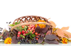Autumn berries, flowers and leaves in  basket isolated on white. Stock Photo