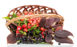 Autumn berries and leaves in a basket isolated on white Stock Photo