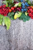 Autumn berries Stock Photo