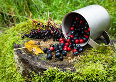 Autumn berries spilled on a stump. Blueberries, cranberries and elderberries spilled on a stump from a titanium mug Stock Image