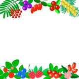 Autumn berries on a white background stock illustration